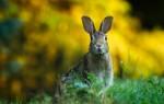 Чем питается заяц в природе?