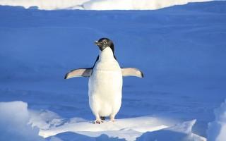 Где обитают пингвины?