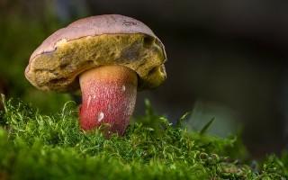Съедобные грибы — описание, как выглядят