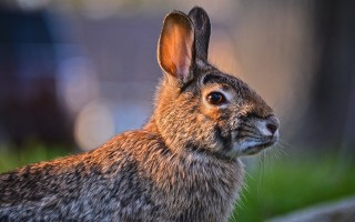 Самые популярные породы кроликов — какие бывают