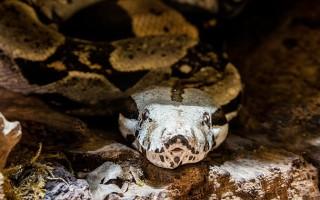 Анаконда – самая длинная в мире змея