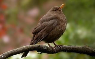 Птицы России – список птиц, виды