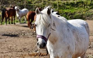Породы лошадей — название, описание