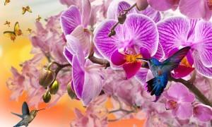 Виды орхидей фото и названия