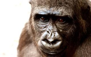 Виды обезьян — какие бывают и где обитают