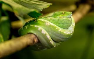Змеи и ящерицы описание видов