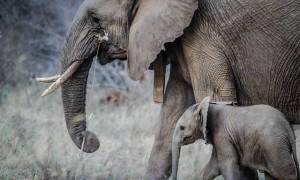 Детеныши животных: как правильно называются