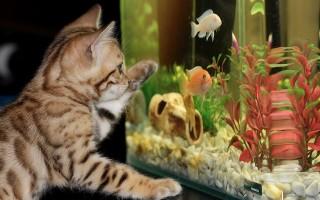Виды аквариумных рыб: популярные, неприхотливые и необычные обитатели