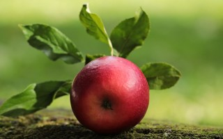 Сорта яблок — плюсы и минусы каждого сорта